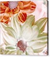 Chrysanthemum Creativity Acrylic Print