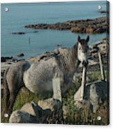 Cleggan Connemara Acrylic Print