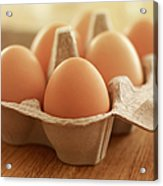 Close Up Of Brown Eggs In Carton Acrylic Print