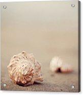 Close Up Of Shells On Beach Acrylic Print