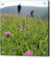 Clover Field Acrylic Print