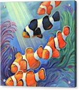 Clownfish Paradise Acrylic Print