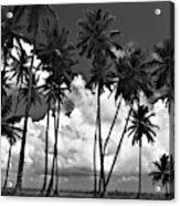 Coconut Trees At Mayaro Acrylic Print