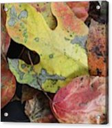 Collective Autumn Color Acrylic Print