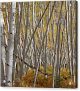 Colorful Stick Forest Acrylic Print