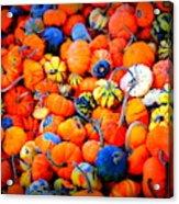 Colorful Tiny Pumpkins Acrylic Print