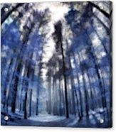 Colorful Trees Iv Acrylic Print