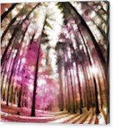 Colorful Trees V Acrylic Print