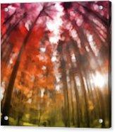 Colorful Trees Vii Acrylic Print