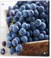 Concord Grapes Acrylic Print