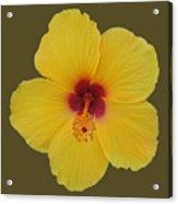 Cool Bloom Acrylic Print