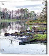 Coosaw - Early Morning Rice Field Acrylic Print