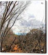Cottonwood Arizona Jail Trail Trees Path Sky Clouds 5229 Acrylic Print