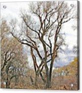 Cottonwood Az Bayou Leafless Tree Sky Clouds Path 31262019  Acrylic Print