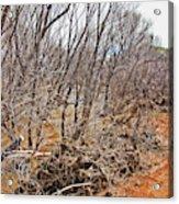 Cottonwood Az Bayou Leafless Trees Scrub Water Sand Clouds 3262019_5320 Acrylic Print