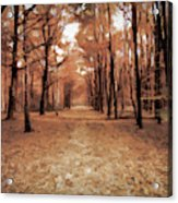 Covered Path Acrylic Print