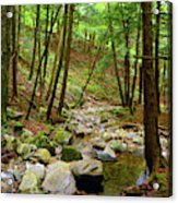 Creek In Massachusetts 2 Acrylic Print