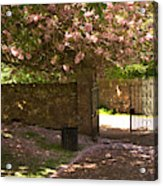 Crichton Church Entrance Gate And Tree In Pink Bloom Acrylic Print