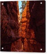 Crimson Crevice Acrylic Print
