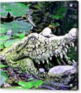 Crocodile Profile. Acrylic Print