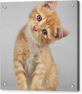 Cute Little Kitten Acrylic Print