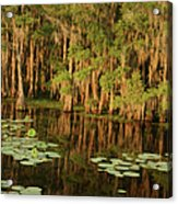 Cypress In The Lake Acrylic Print