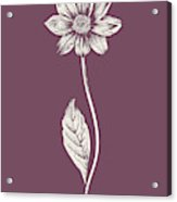 Dahlia Purple Flower Acrylic Print