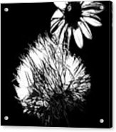 Daisy And Thistle Black And White Acrylic Print