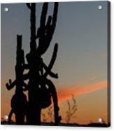Dancing Saguaro Cactus Acrylic Print