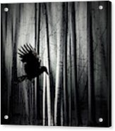 Darker - Raven Acrylic Print