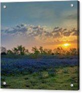 Daybreak In The Land Of Bluebonnets Acrylic Print