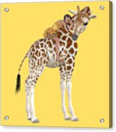 Daydreaming Of Giraffes Png Acrylic Print
