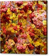 Days Of Autumn 18 Acrylic Print