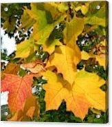 Days Of Autumn 24 Acrylic Print