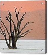 Dead Vlei Sossusvlei Africa Namibia Acrylic Print