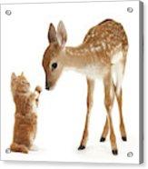 Deer Little Friend Acrylic Print