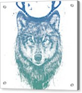 Deer Wolf Acrylic Print