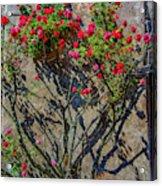 della Rocca Rose Acrylic Print