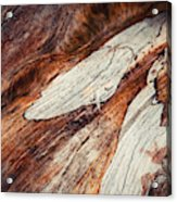 Detail Of Abstract Shape On Old Wood Acrylic Print