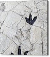 Detail Of Dinosaur Tracks In Spain Acrylic Print