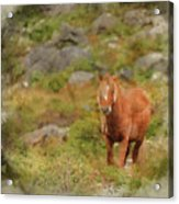 Digital Watercolor Painting Of Stunning Image Of Wild Pony In Sn Acrylic Print