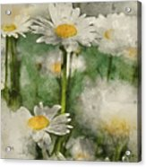 Digital Watercolor Painting Of Wild Daisy Flowers In Wildflower  Acrylic Print