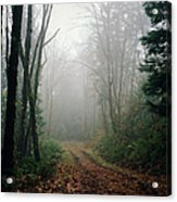 Dirt Road Leading Through Foggy Forest Acrylic Print