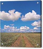 Dirt Road On Prairie With Cumulus Sky Acrylic Print