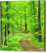 Dirt Road Through Lush Beech Tree Acrylic Print