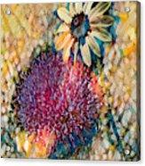 Dizzy Daisy Acrylic Print