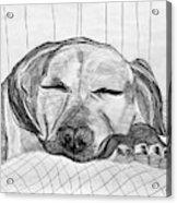 Django Napping Acrylic Print