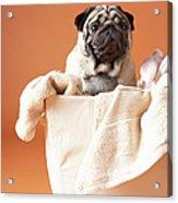 Dog In Basket Acrylic Print