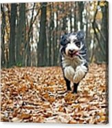 Dog Running In Forest Acrylic Print