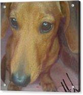 Doggone Acrylic Print